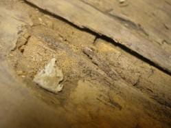 внутренний слой древесины был изъеден жучками